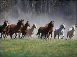 Stampeding horses picture